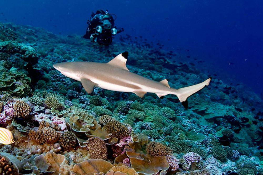 19-sharkpoint-viagilicat.com