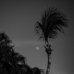 Moon and Palm Tree