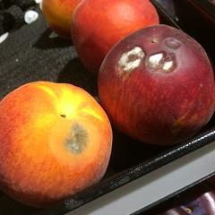 produce, fruit, food, nectarine, still life photography, apple,
