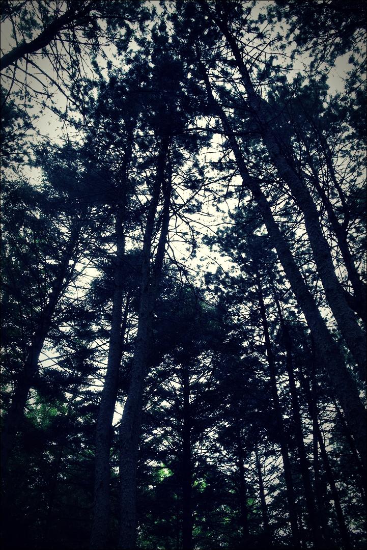 숲-'남이섬. Namisum Gapyeong Korea.'