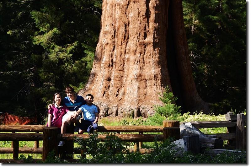 Sentinel Tree 5