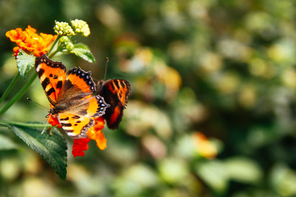 Dali - Hu Die Quan (Butterfly Spring)