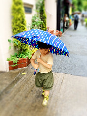 梅雨入りとらちゃん 2014/6/5