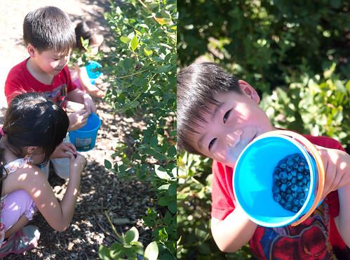 blueberry27