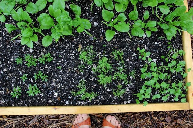 in my garden :: june 6