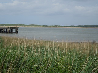 14 06 07 Day 6 - 4 Taw Estuary  (5)
