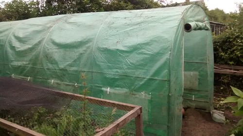 polytunnel June 14