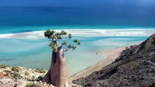Amazing Places: Socotra