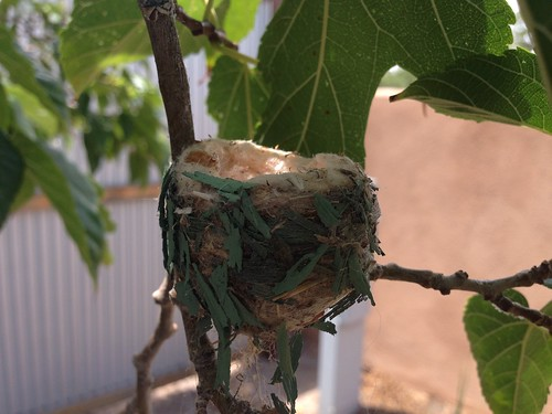 Humming Bird Nest by mikey and wendy