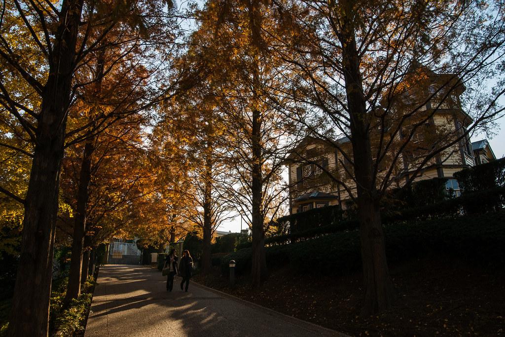 フランス山公園-秋-