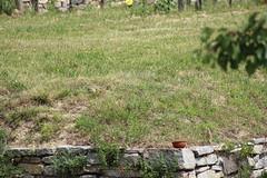 Zeisel - Ground Squirrel