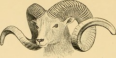 "Image from page 211 of ""Horn measurements and weights of the great game of the world: being a record for the use of sportsmen and naturalists"" (1892)"