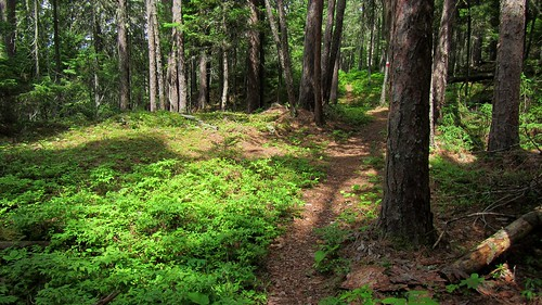 hiking québec randonnée pleinair parcsquébec louuiss lequébecetsesparcsnationaux parcnationaldulactémiscouata