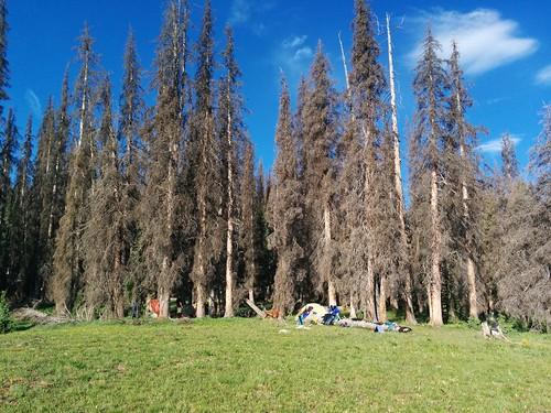Rincon La Osa camp