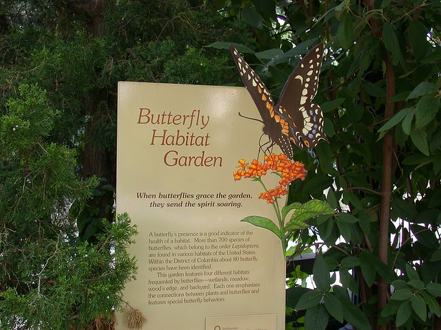 Butterly Habitat Garden