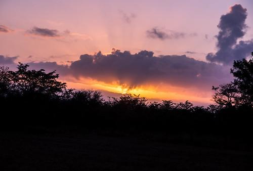 southafrica safari mpumalanga krugerpark