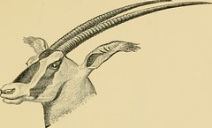 "Image from page 166 of ""Horn measurements and weights of the great game of the world: being a record for the use of sportsmen and naturalists"" (1892)"