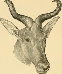 "Image from page 73 of ""Horn measurements and weights of the great game of the world: being a record for the use of sportsmen and naturalists"" (1892)"