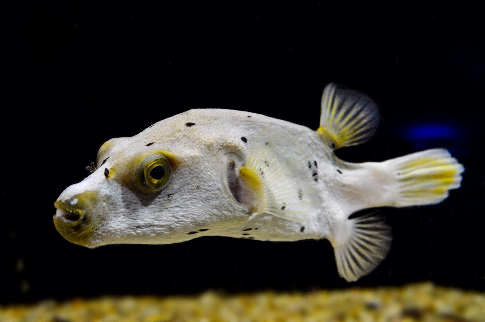 Some saltwater fish photography forum for Your inner fish summary