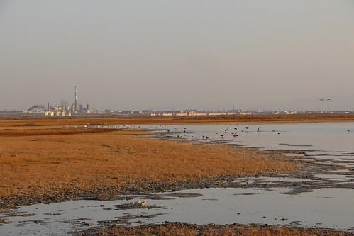 2013年12月內蒙古阿拉善盟騰格里沙漠的草原正受到遠方騰格里工業園的非法排放汙染 。攝影:林吉洋攝影