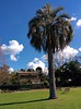 Botanic Gardens, Melbourne