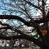 Spring! Watson Shops. #cbr #spring #trees #blossom #yarnbombing