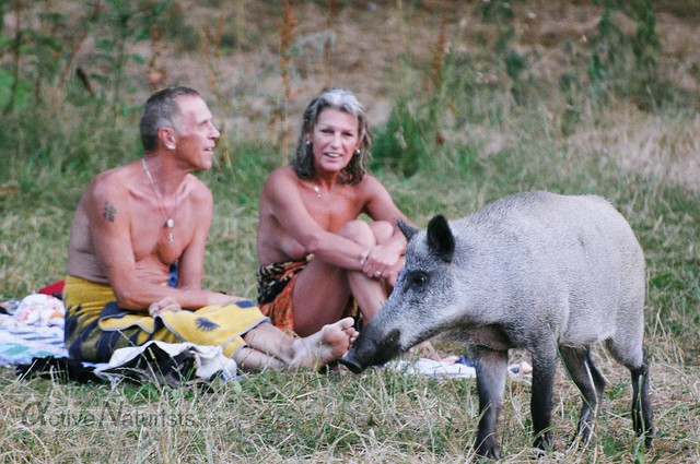 naturist & wild boar 0001 Teufelsee in Grunewald, Berlin, Germany