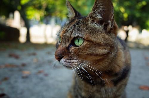 Cat in Myohonji Temple