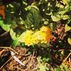 Flores #Flores #flowers #serranegra #saopaulo