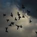 Twenty four birds by Sappho et amicae (delicate health)