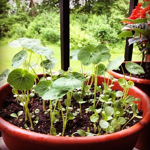 Back porch, June