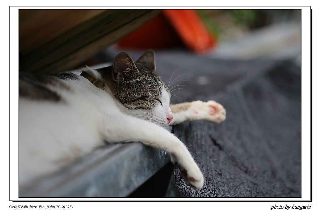1030612侯硐拍貓趣!