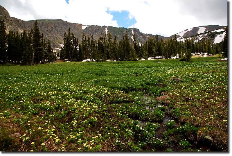 A large meadow Before Diamond Lake 1