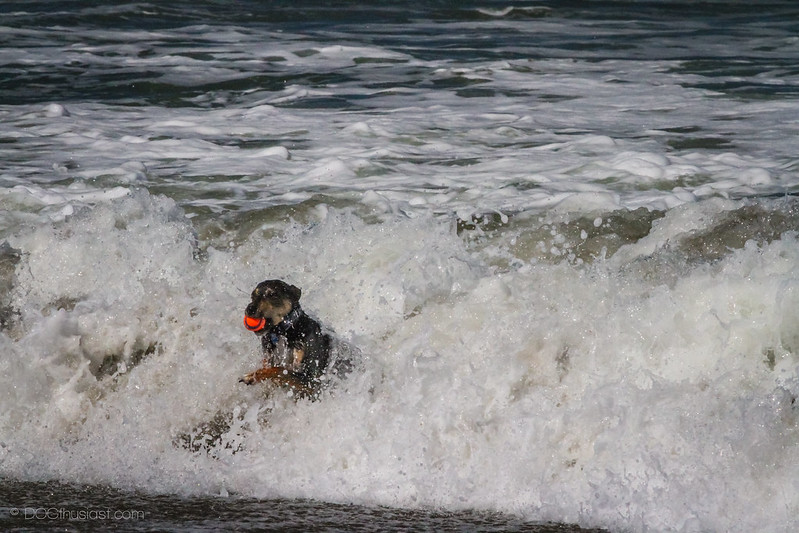 Mort in a wave at the beach.
