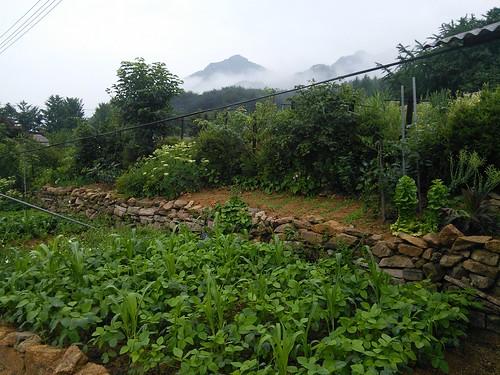 시골집풍경 | 할머니 밭
