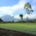 Small photo of Mount Batur Bail