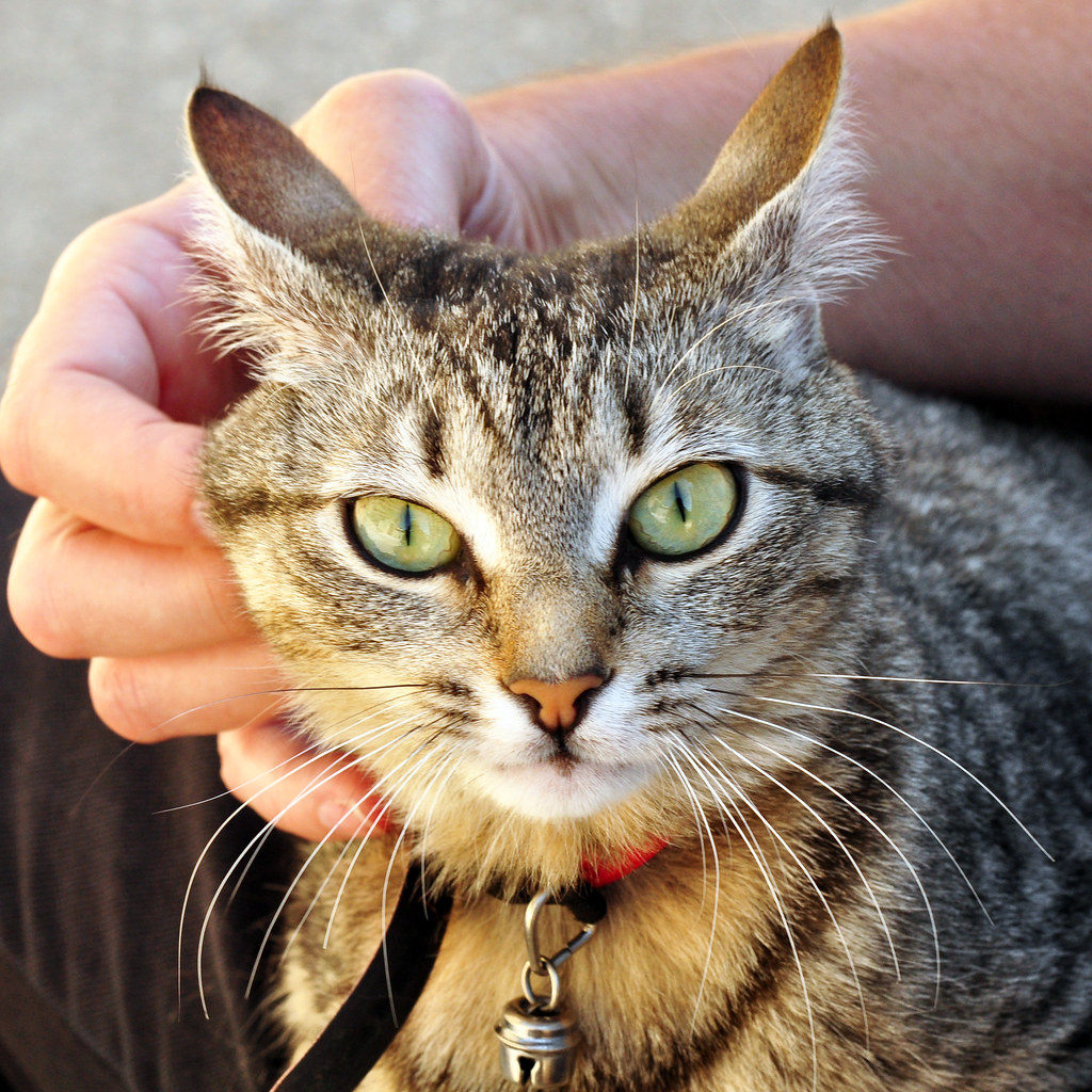 Michou aus Buis-les-Baronnies Katze Chat Urlaubsbekanntschaft Katzenfotografin Brigitte Stolle