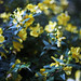 gardens5 by Banio_z_Polski
