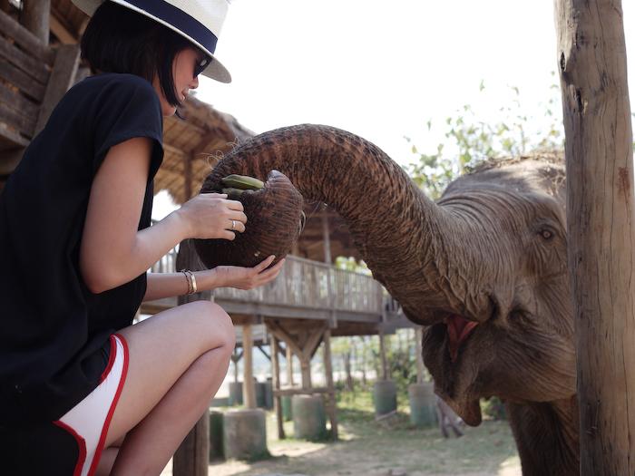 Elephant Nature Park Chiang Mai-9