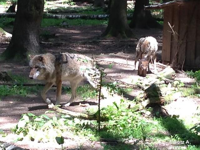 Muenchen Wildpark Poing Juni_2014_035