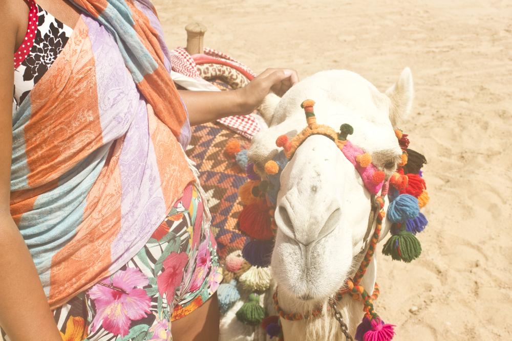 Casanova camel Facebook egypt sensatori sharm el sheikh laila arab bedouin arabic arabia travelling on a camel