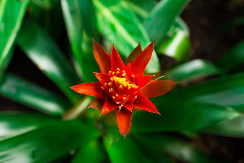 Botanical Conservatory_03