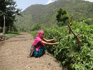 Babli Devi at her farm.