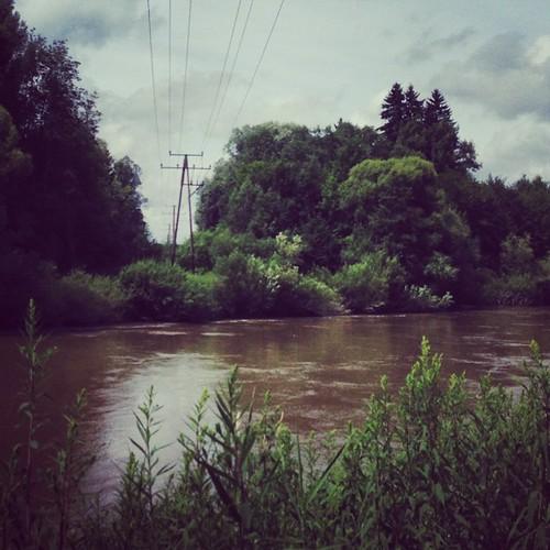 #iller #swamp