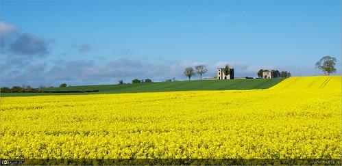 summer flower castle yellow ruin localhistory historicbuilding landscapeshot rathcoffeycastle rapebrassicanapus