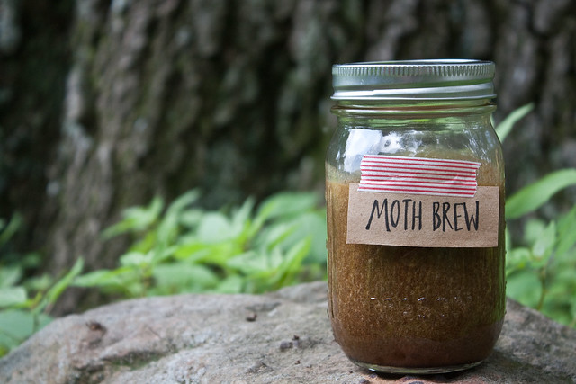 Moth brew to attract moths