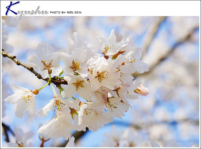 kyushu20140323016