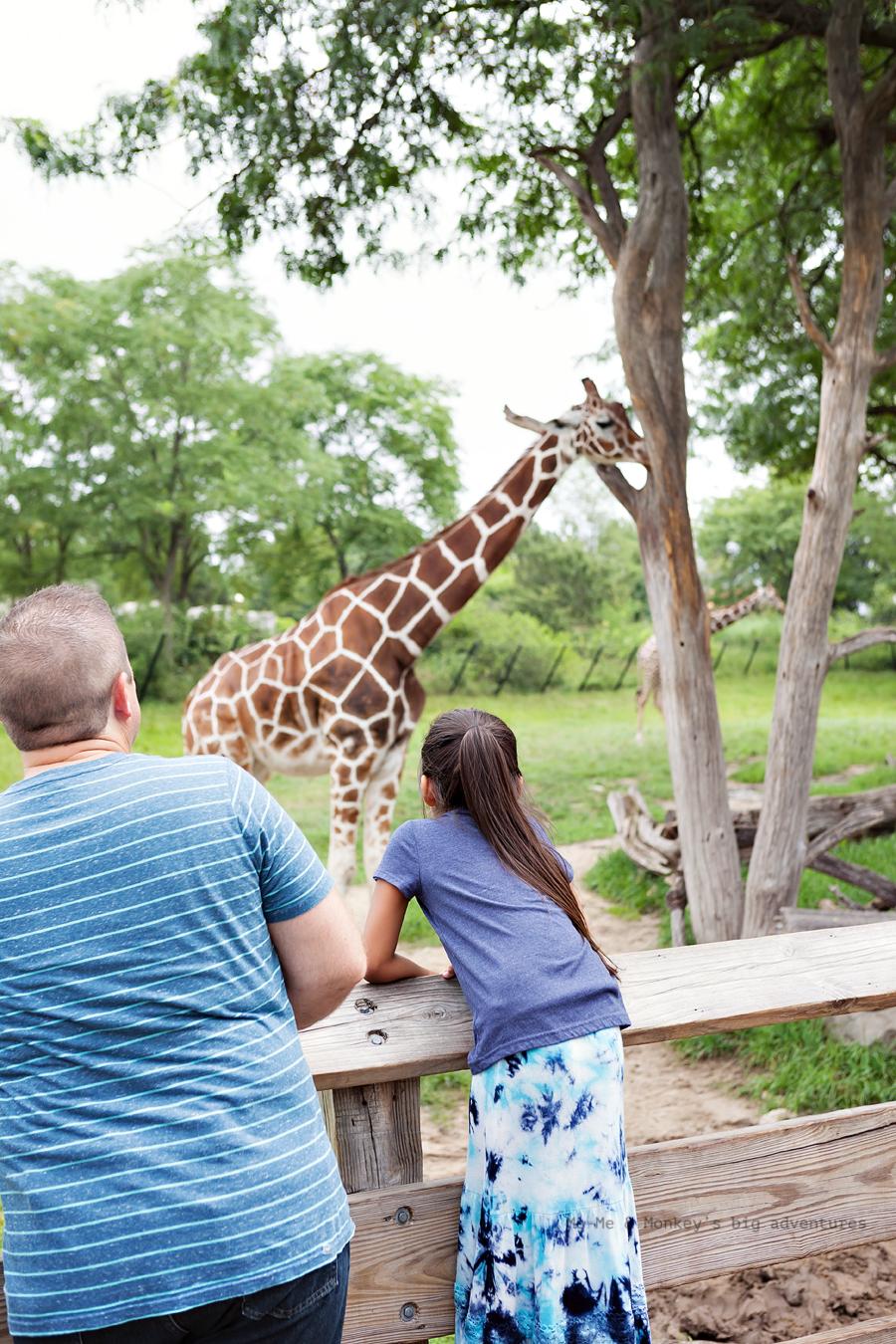 zoo 6 blog