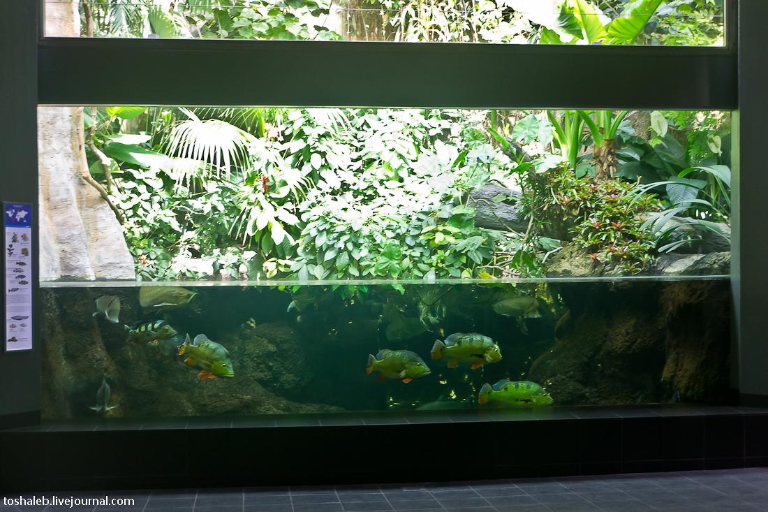 Берлин_аквариум-25