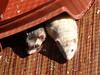 Cosy ferrets